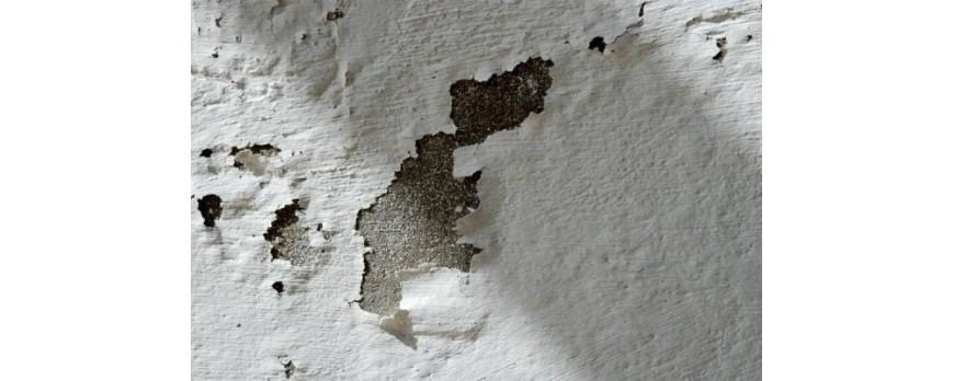 6 pasos para pintar una pared con humedad blog de el - Pasos para pintar una pared ...