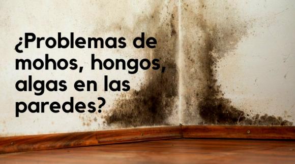 ¿Problemas de mohos, hongos, algas en las paredes?