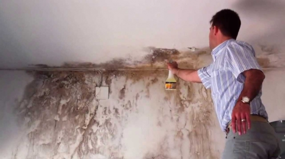 Descubre el antimoho que, en pocos minutos, limpiará y desinfectará tus paredes