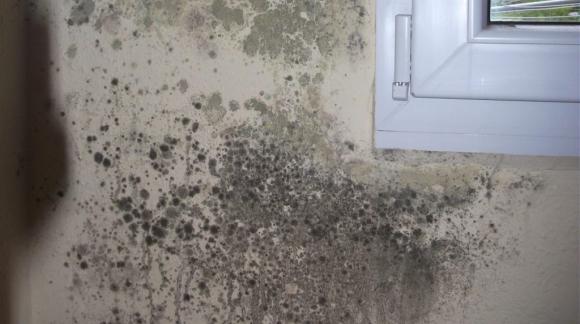 ¿Cómo quitar humedades y moho?