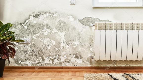 Conoce la mejor solución para paredes manchadas por mohos, hongos o algas